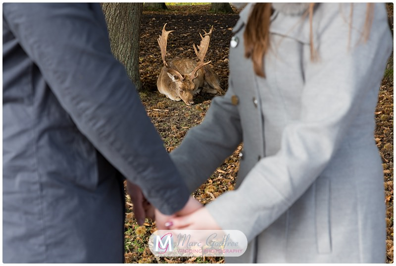 Nathan & Francesca - Pre-wedding Session Knole Park-2